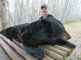 Another of the gigantic bears from our area. Measured at 552 pounds, this monster would have easily weighed in at 100 pounds more as a fall bear. Through his return trips, Mark soon became a good friend and I look forward to each of his visits. Always anticipating the best he continually brings excitement to our hunting camp and his guides always enjoy their week with Mark.